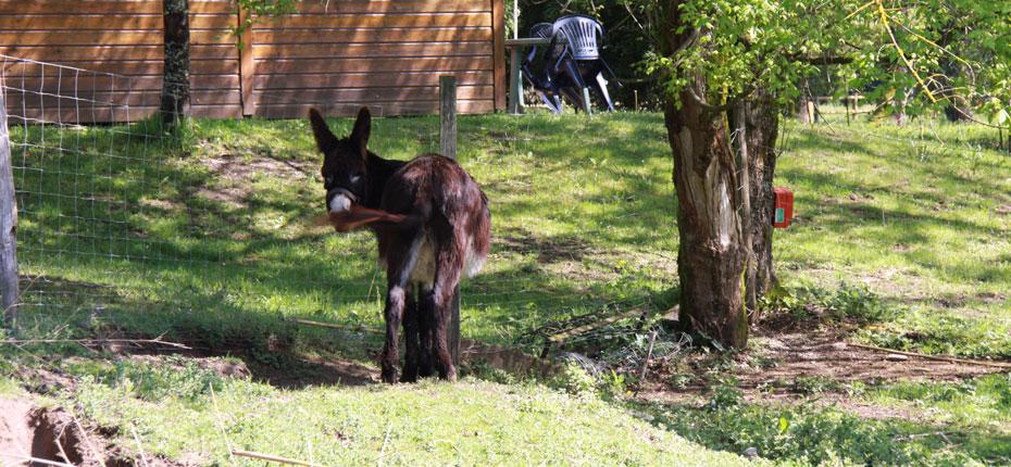 Les animaux du parc des Chalets Mirandol dans le Lot