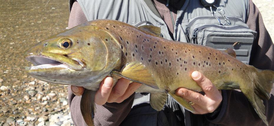 La pêche au pied du camping Mirandol