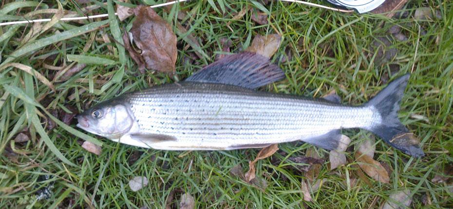 Profitez de la Vallée de la Dordogne pour pêcher dans le Lot