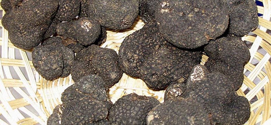 Les truffes noires du Périgord